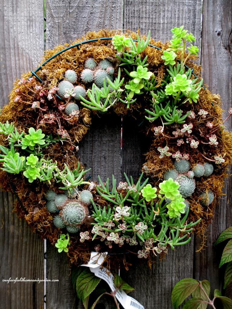 Succulent Wreath https://ourfairfieldhomeandgarden.com/unexpected-garden-accents/
