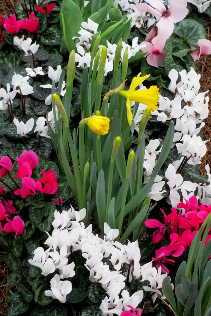 Spring Bulbs http://ourfairfieldhomeandgarden.com/a-visit-to-longwood-gardens-orchid-extravaganza-2015/