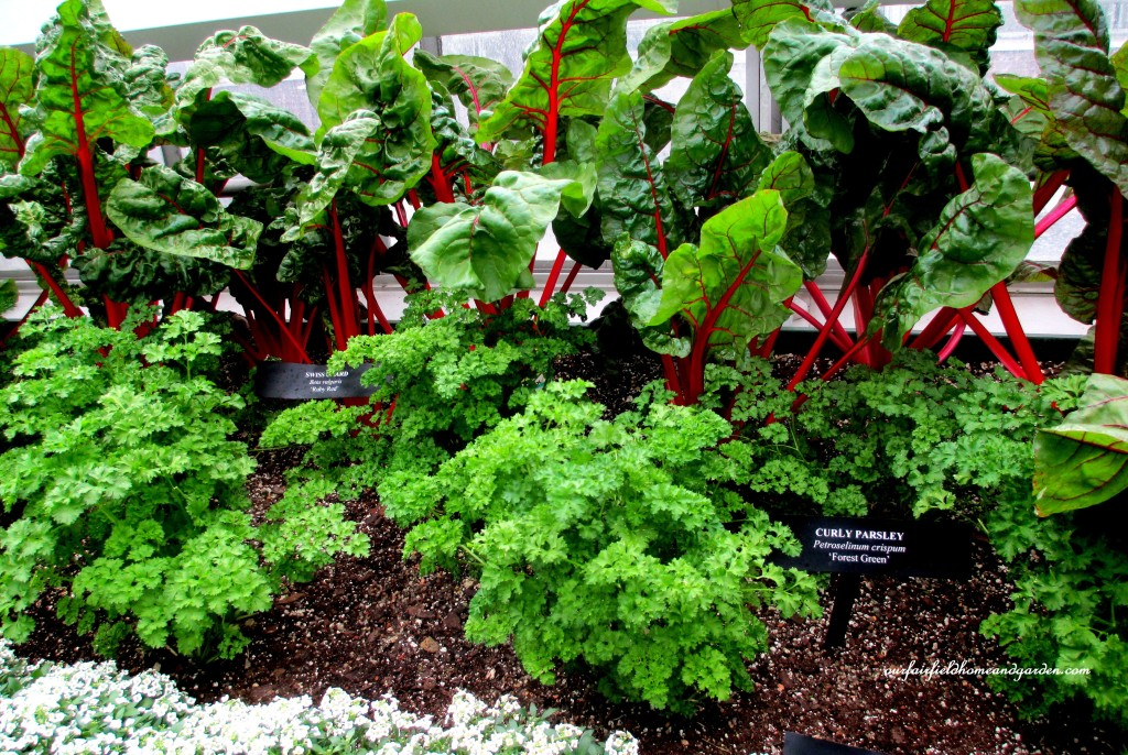 Greenhouse Vegetables http://ourfairfieldhomeandgarden.com/a-visit-to-longwood-gardens-orchid-extravaganza-2015/
