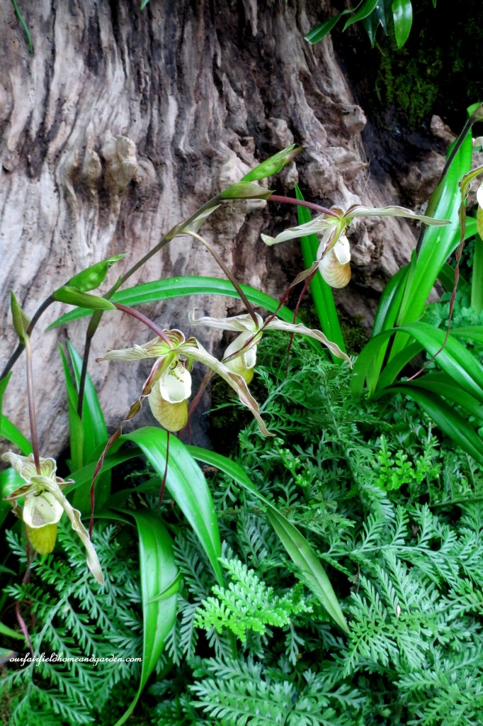 Woodland Orchids~ Longwood Gardens https://ourfairfieldhomeandgarden.com/a-visit-to-longwood-gardens-orchid-extravaganza-2015/