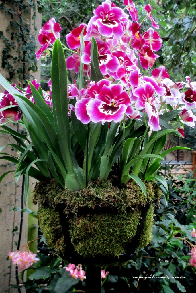 Orchid Basket http://ourfairfieldhomeandgarden.com/a-visit-to-longwood-gardens-orchid-extravaganza-2015/