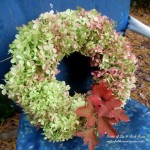 Dried Hydrangea Wreath https://ourfairfieldhomeandgarden.com/diy-free-fall-wreath-using-hydrangeas/