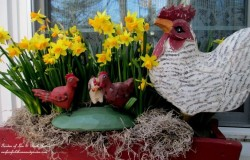 Daffodils and Chickens Windowbox
