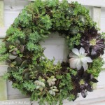 DIY ~ Succulent Wreath https://ourfairfieldhomeandgarden.com/diy-project-make-a-succulent-wreath/