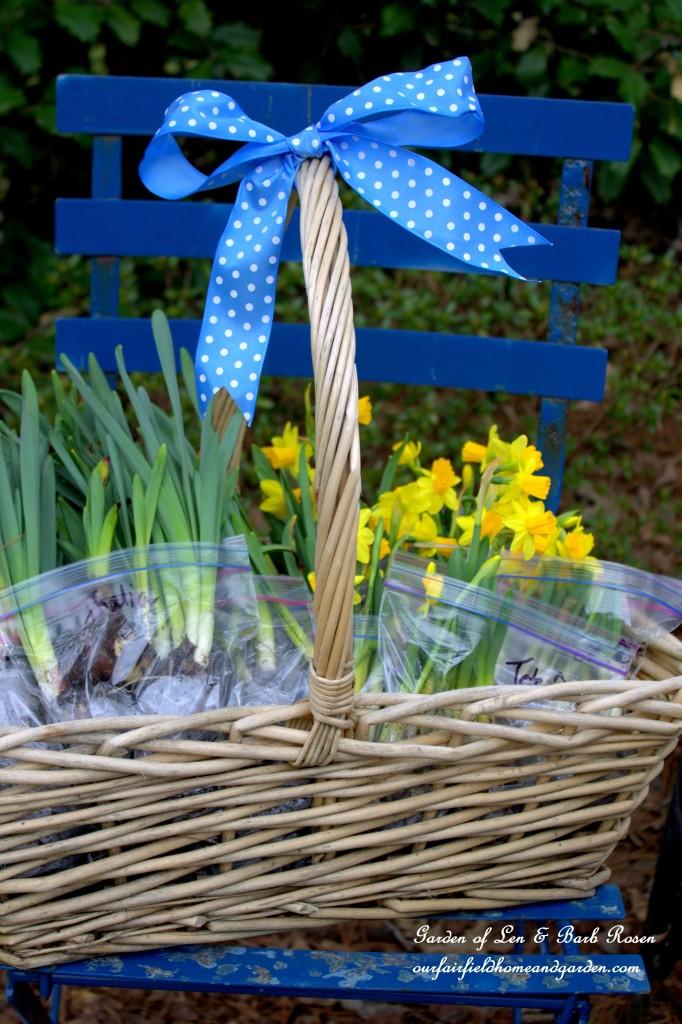 Basket of Spring Bulbs for Sharing! https://ourfairfieldhomeandgarden.com/easy-gardening-tip-planting-sharing-bulbs/