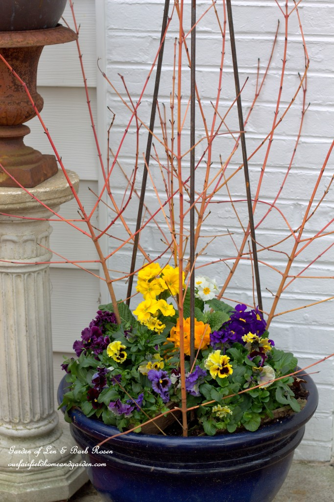 Pansies, Primroses and Redtwig Dogwood Branches http://ourfairfieldhomeandgarden.com/spring-fling-our-fairfield-home-and-gardens-windowboxes/