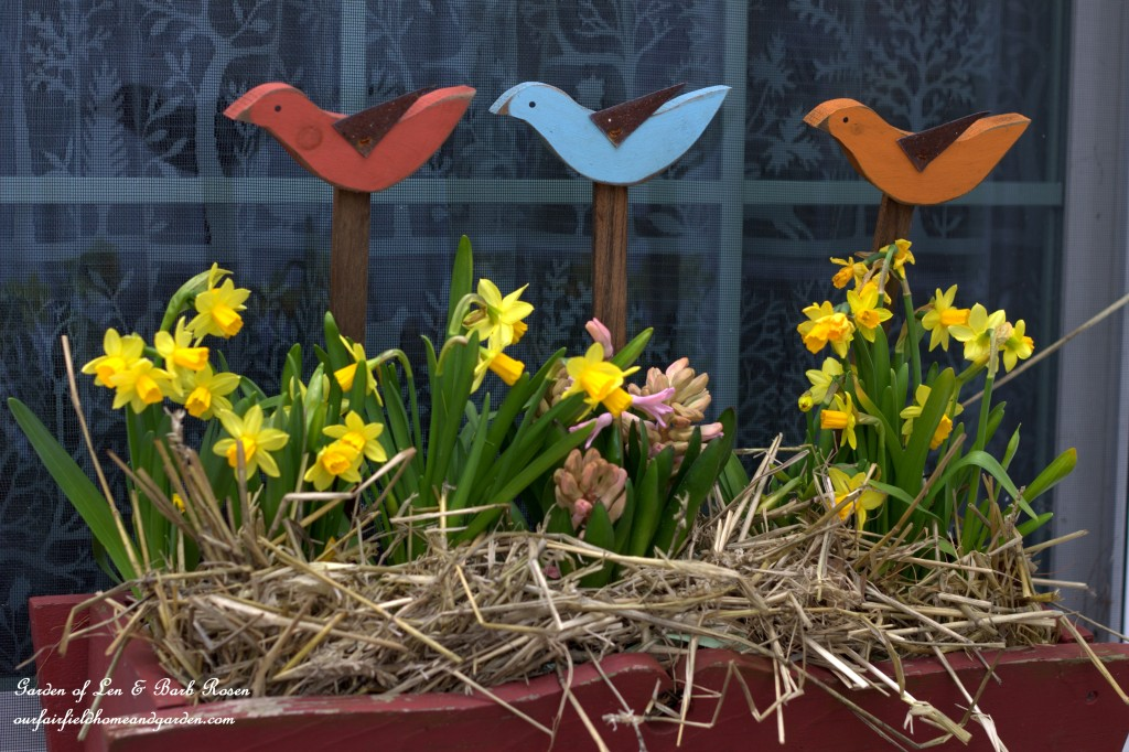 Kitchen windowbox with Hyacinth, Tete a Tete Daffodils and wooden birds https://ourfairfieldhomeandgarden.com/spring-fling-our-fairfield-home-and-gardens-windowboxes/