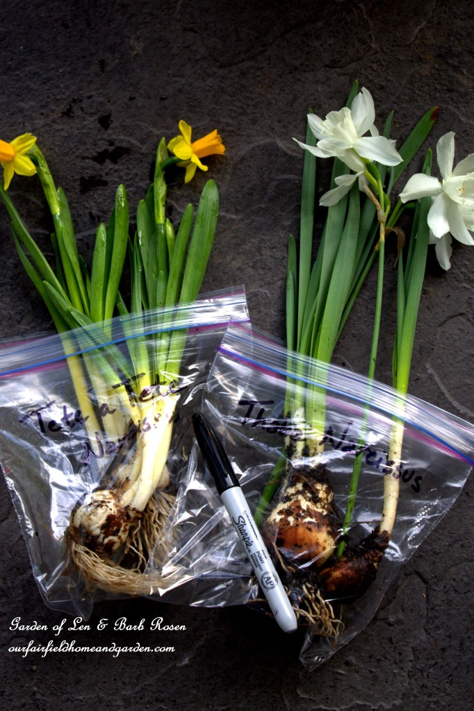 Share your bulbs! Label them for easy identification. http://ourfairfieldhomeandgarden.com/easy-gardening-tip-planting-sharing-bulbs/