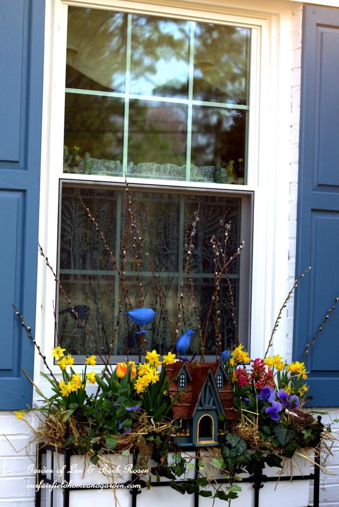 Signs of spring in a windowbox http://ourfairfieldhomeandgarden.com/spring-fling-our-fairfield-home-and-gardens-windowboxes/