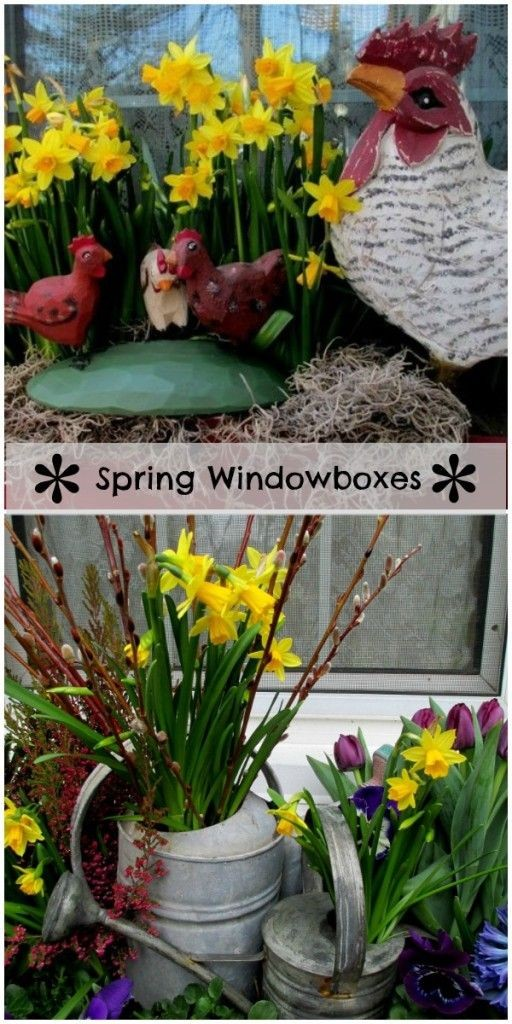 A Collection of Spring Windowboxes  http://ourfairfieldhomeandgarden.com/spring-windowboxes/