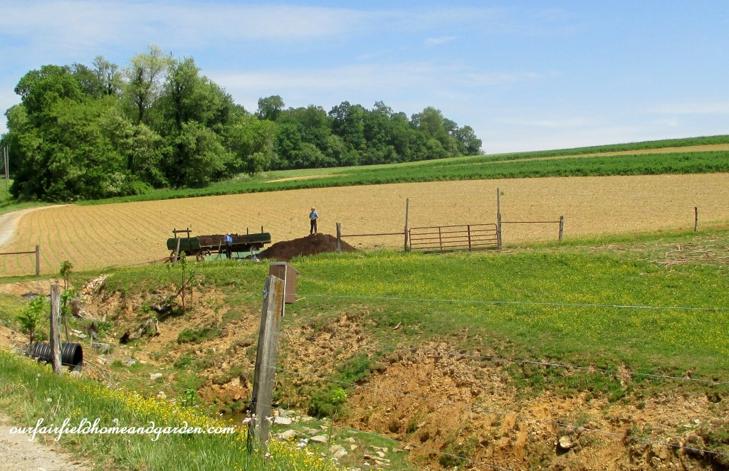 Amish boys spreading manure. http://ourfairfieldhomeandgarden.com/road-trip-lancaster-county-greenhouses/