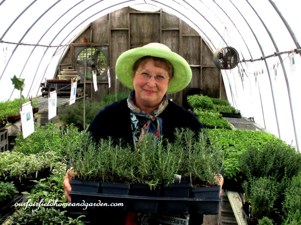 Never enough Rosemary! Barb Rosen at Groff's Plant Farm https://ourfairfieldhomeandgarden.com/road-trip-lancaster-county-greenhouses/