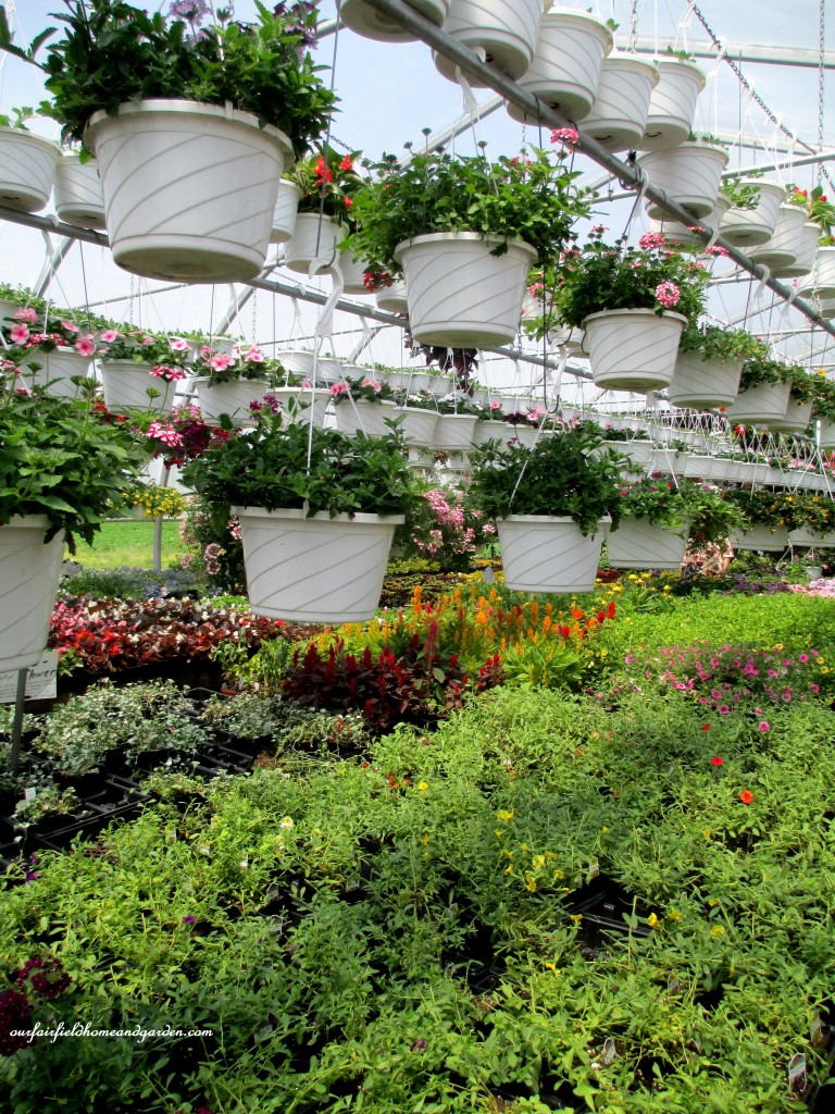 Greenhouses filled with plants of every kind! http://ourfairfieldhomeandgarden.com/road-trip-lancaster-county-greenhouses/