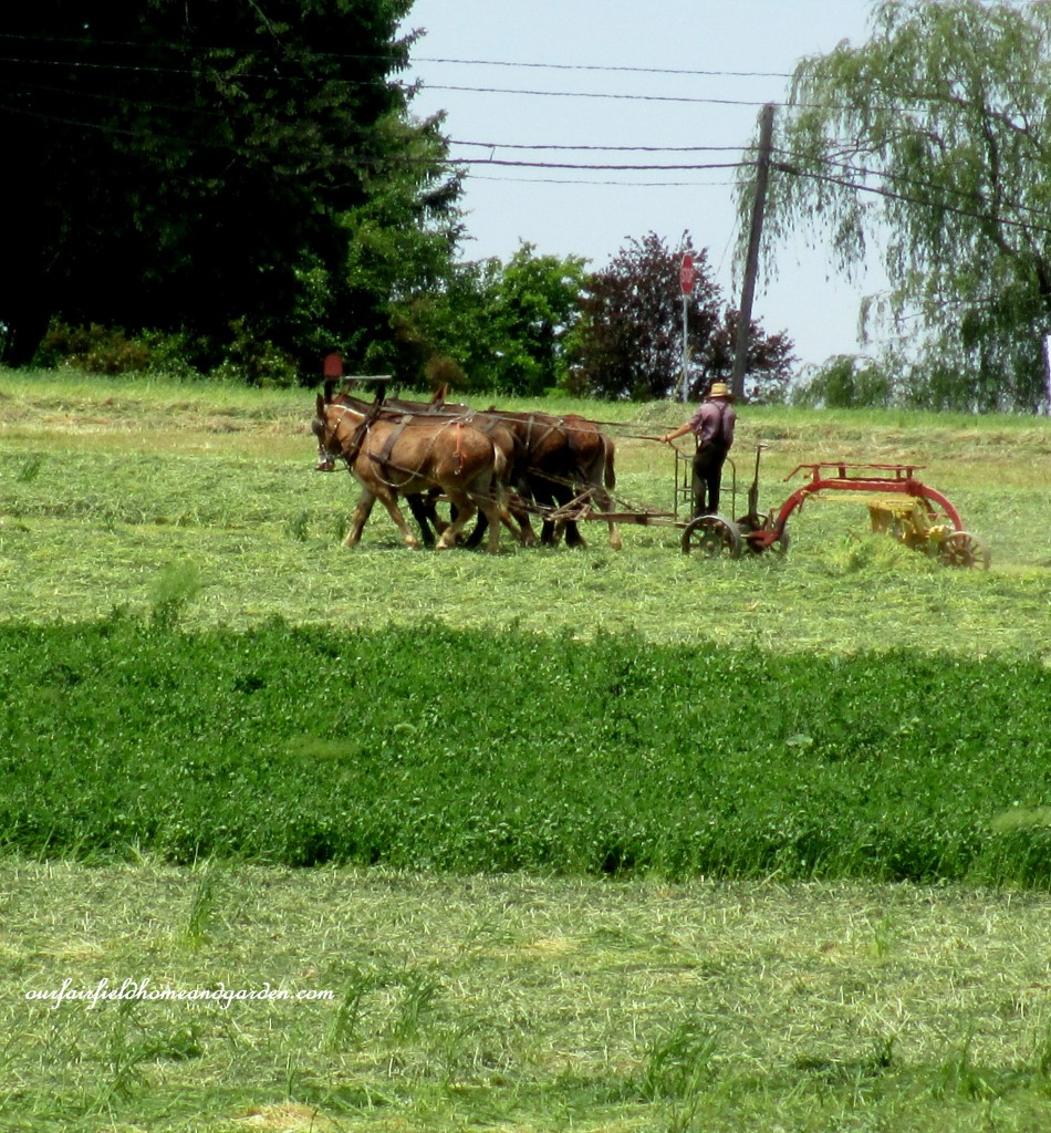 Hay Mowing Time http://ourfairfieldhomeandgarden.com/road-trip-lancaster-county-greenhouses/