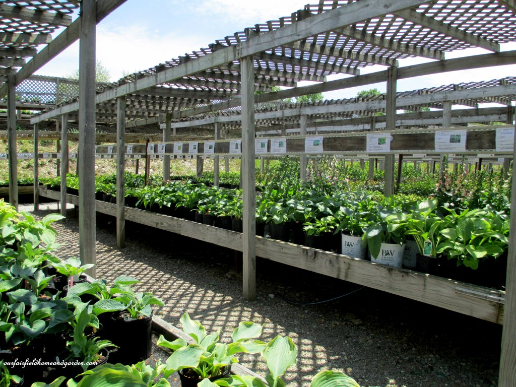 Row after row of shade plants! Sun perennials and greenhouses galore to tempt you at Groff's Plant Farm!