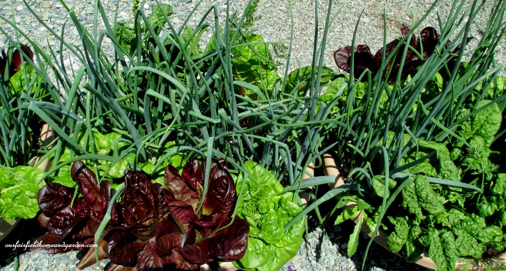 Salad Bowl Container Plantings http://ourfairfieldhomeandgarden.com/road-trip-lancaster-county-greenhouses/
