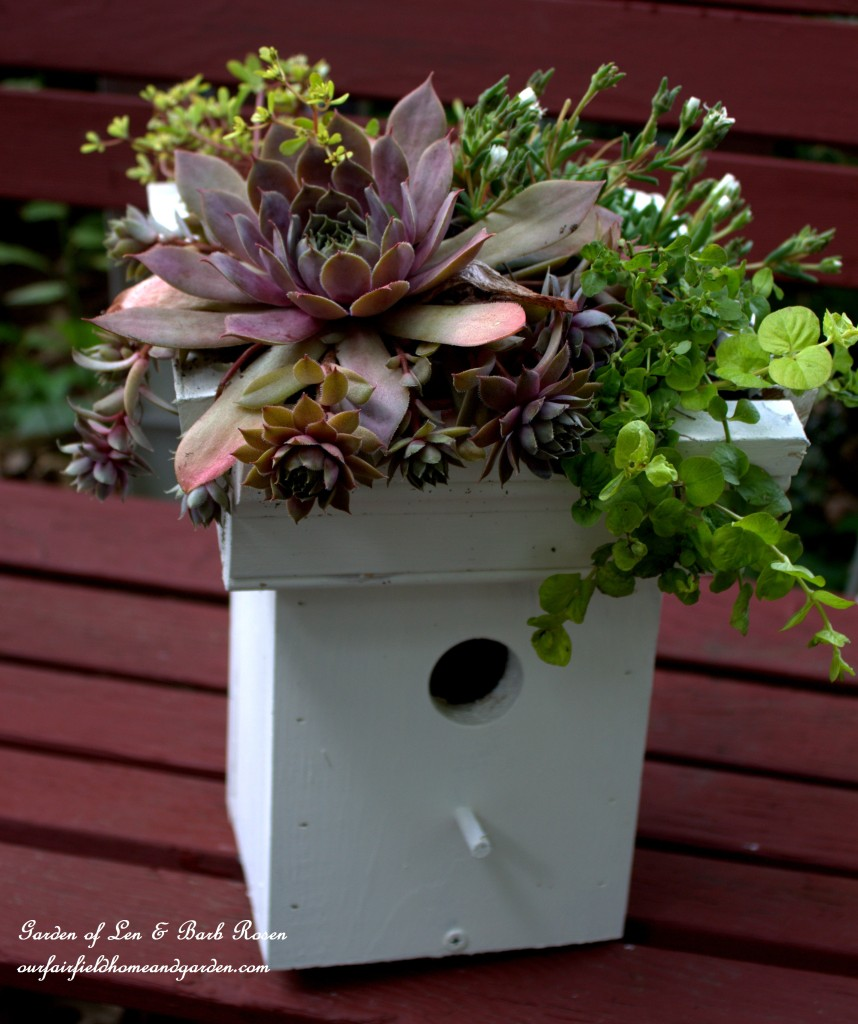 DIY Greenroof Birdhouse https://ourfairfieldhomeandgarden.com/diy-easy-greenroof-birdhouses/