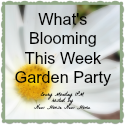 Click here to join the Garden Party! http://www.newhousenewhomenewlife.com/2015/07/whats-blooming-this-week-garden-update-july-27.html