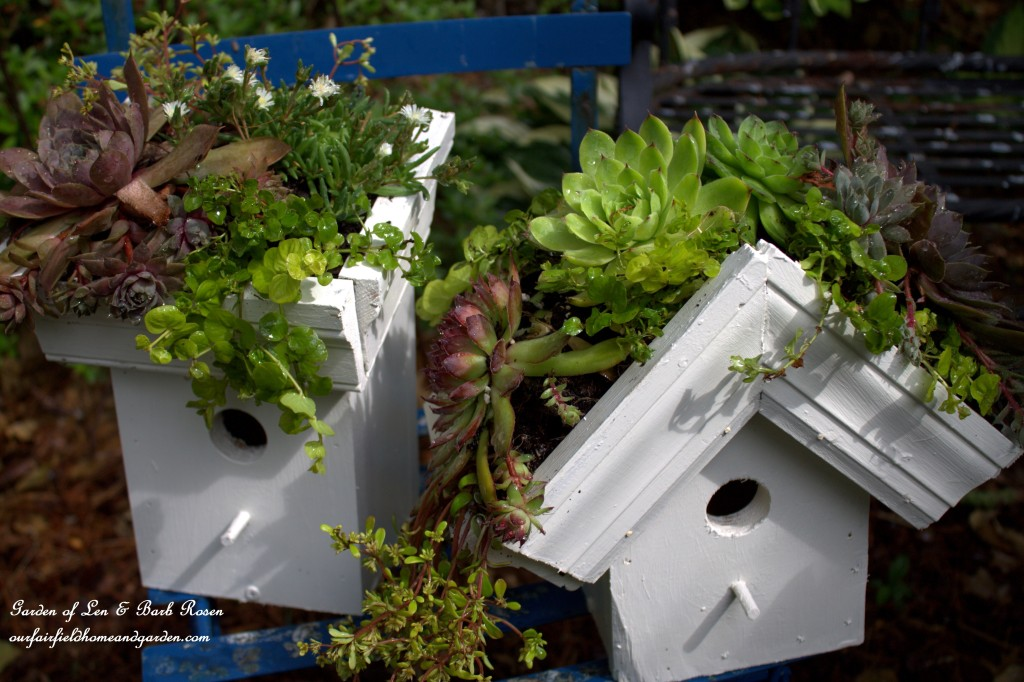 DIY Greenroof Birdhouses http://ourfairfieldhomeandgarden.com/diy-easy-greenroof-birdhouses/