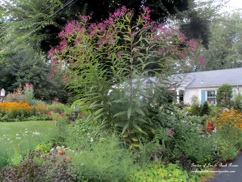 New York Ironweed https://ourfairfieldhomeandgarden.com/plants-to-consider/