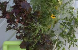 Pass-Along Plant Tote