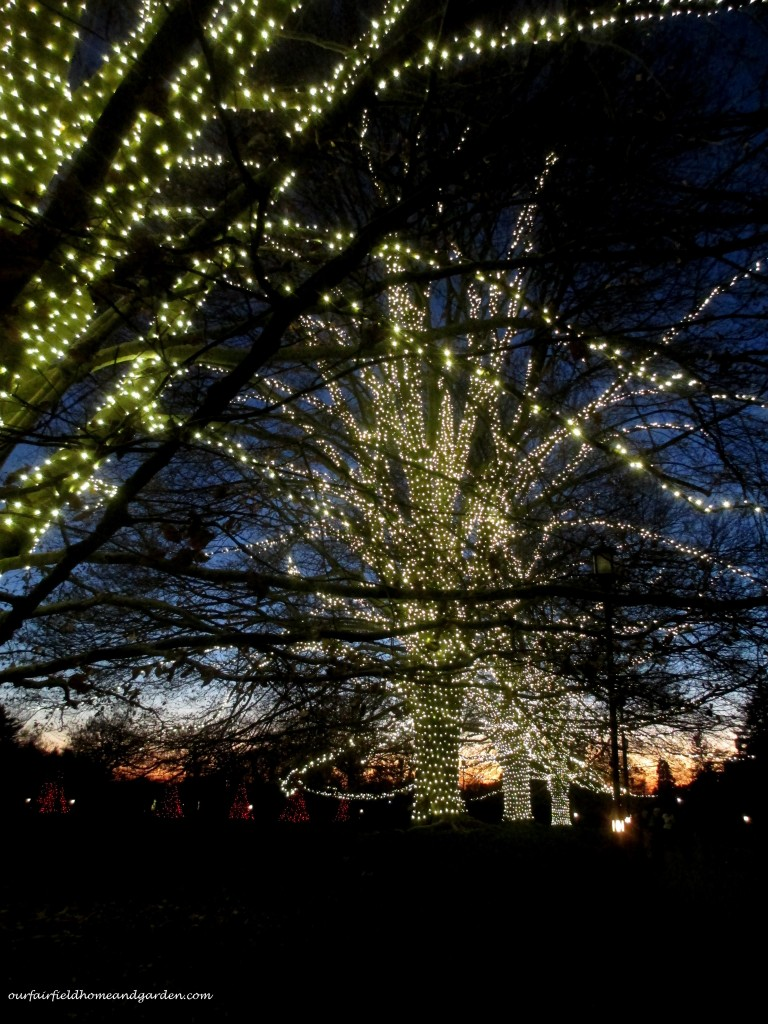 Lighted Trees http://ourfairfieldhomeandgarden.com/a-longwood-christmas-evening-stroll/