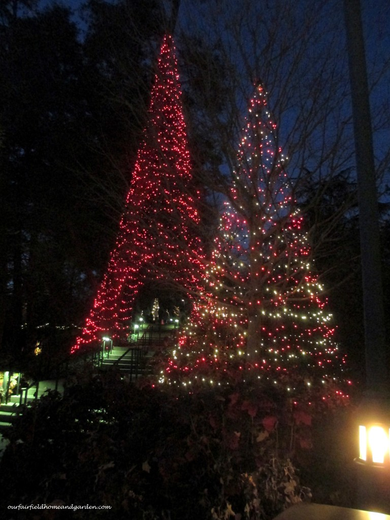 Outdoor Tree Lights http://ourfairfieldhomeandgarden.com/a-longwood-christmas-evening-stroll/