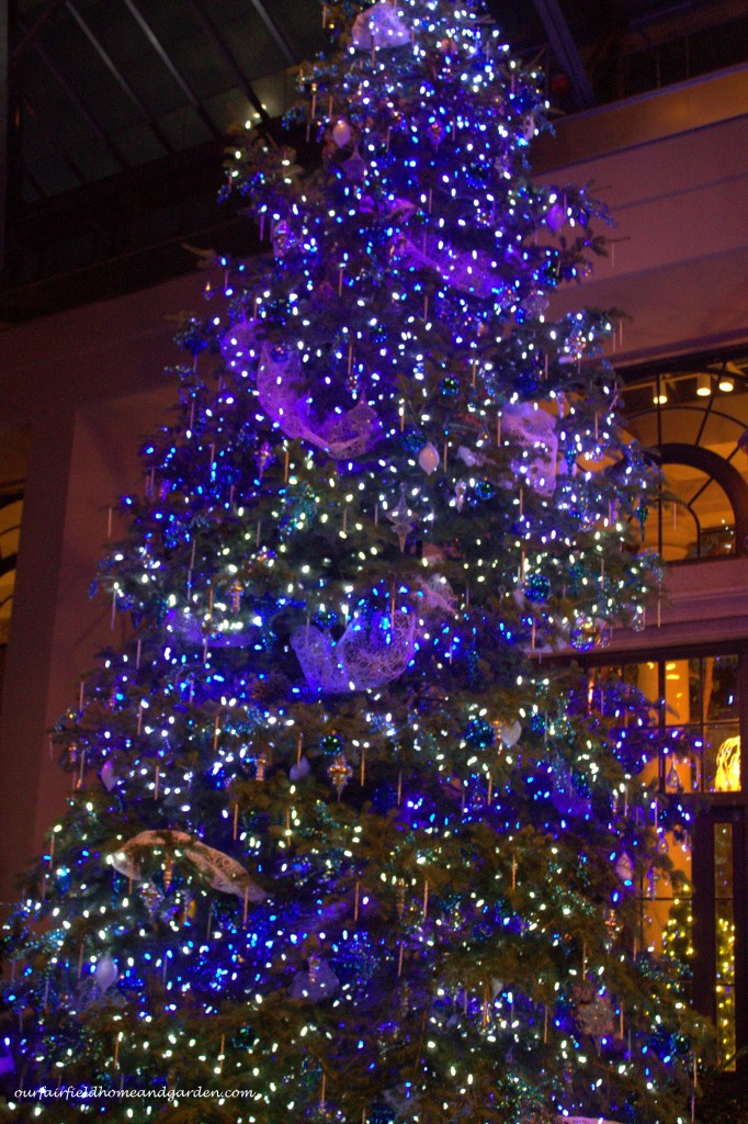 Blue Christmas Tree https://ourfairfieldhomeandgarden.com/a-longwood-christmas-evening-stroll/