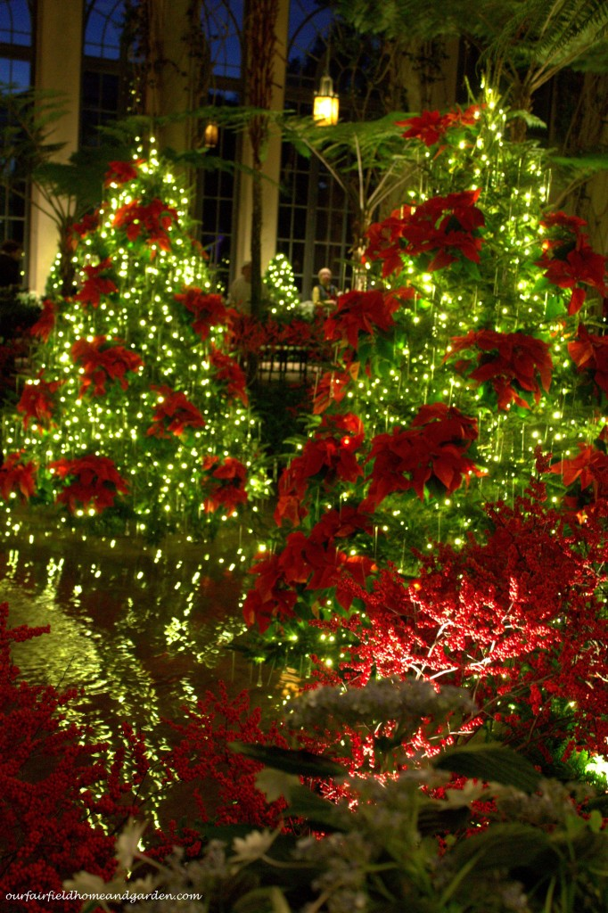 Trees decorated in Poinsettias https://ourfairfieldhomeandgarden.com/a-longwood-christmas-evening-stroll/