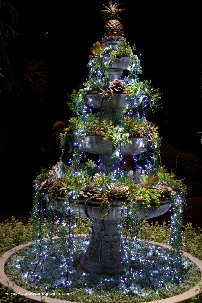 Christmas Succulents http://ourfairfieldhomeandgarden.com/a-longwood-christmas-evening-stroll/