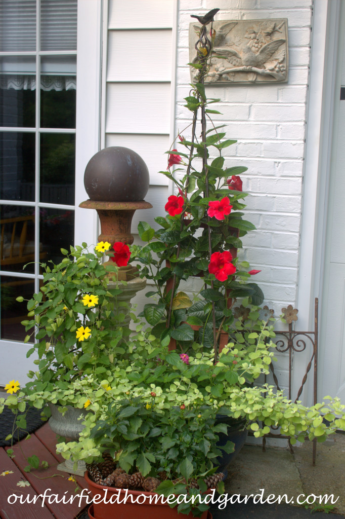 Container Plants http://ourfairfieldhomeandgarden.com/our-fairfield-home-and-garden-tour/