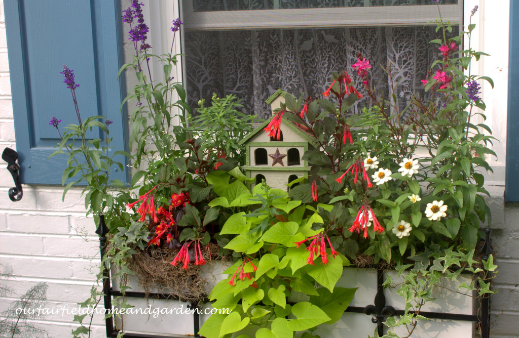 Summer Windowbox https://ourfairfieldhomeandgarden.com/our-fairfield-home-and-garden-tour/