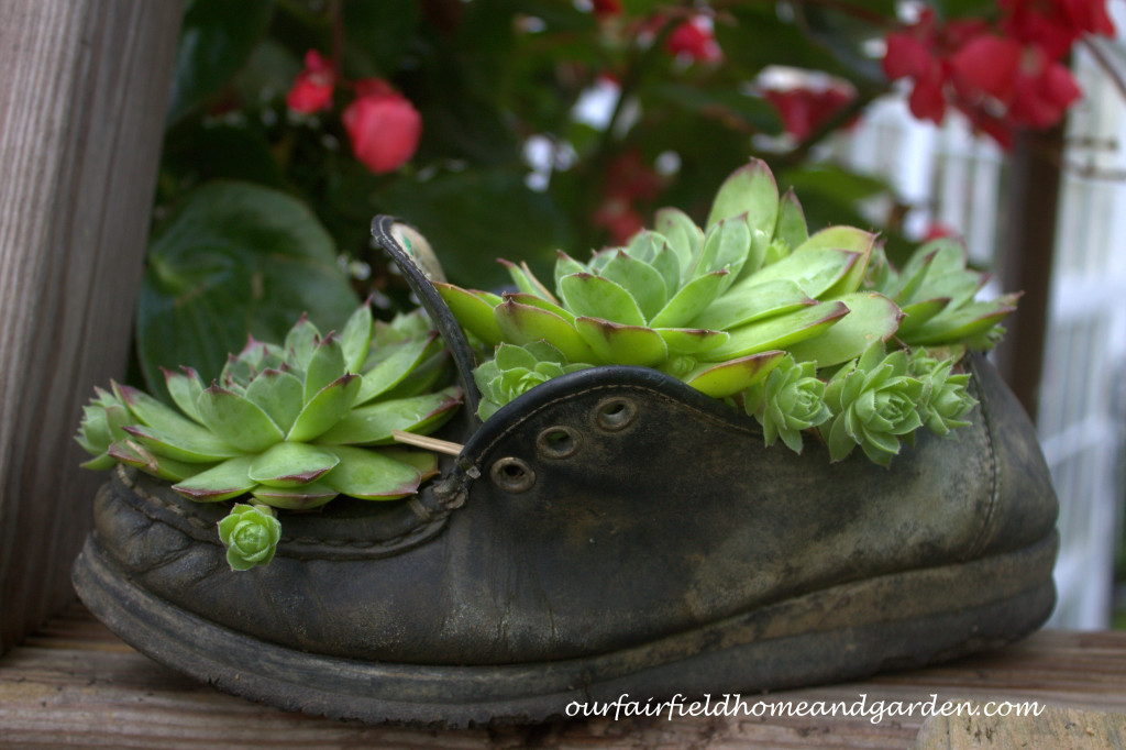 Succulent Shoe https://ourfairfieldhomeandgarden.com/our-fairfield-home-and-garden-tour/