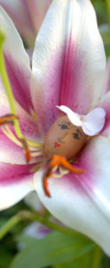 Flower Fairies http://ourfairfieldhomeandgarden.com/flower-fairies/