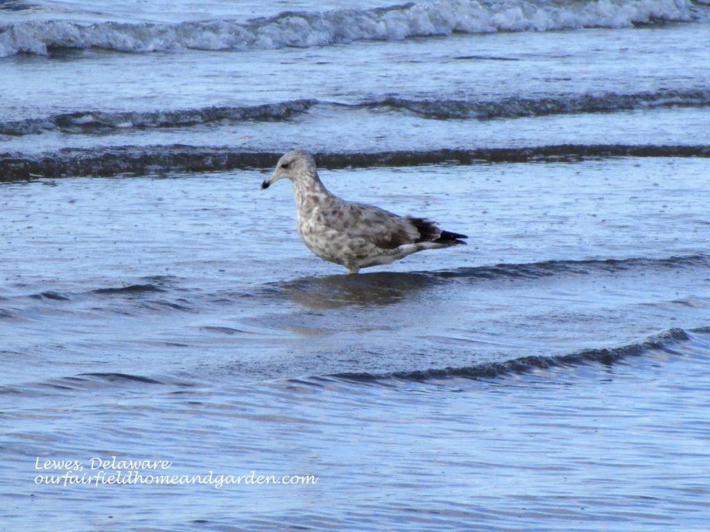 Lewes Beach, DE http://ourfairfieldhomeandgarden.com/field-trip-lewes-beach-get-a-way/