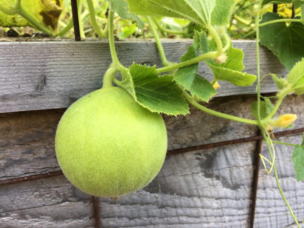 Niki Jabbour's Veggie Garden Remix http://ourfairfieldhomeandgarden.com/book-review-niki-jabbours-veggie-garden-remix/