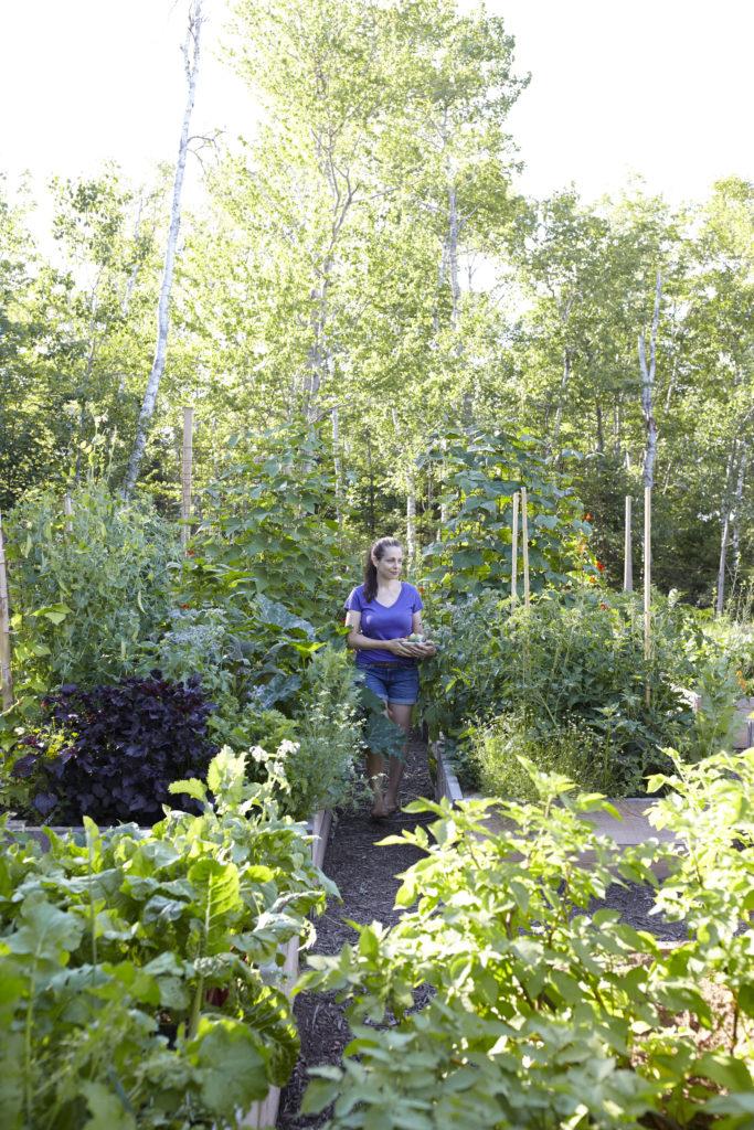 Niki Jabbour's Veggie Garden Remix https://ourfairfieldhomeandgarden.com/book-review-niki-jabbours-veggie-garden-remix/