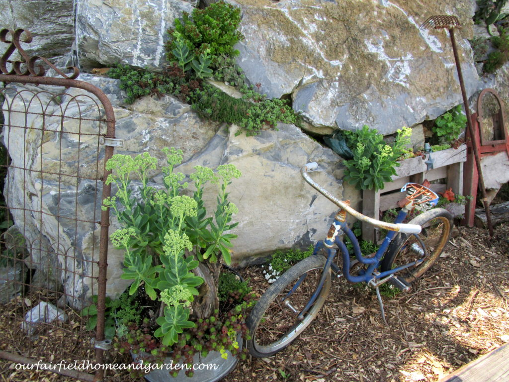 Country Lane Succulents https://ourfairfieldhomeandgarden.com/field-trip-country-lane-succulents-new-holland-pa/
