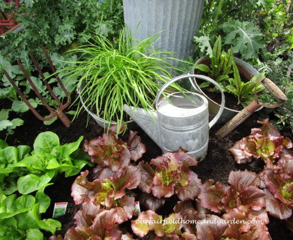https://ourfairfieldhomeandgarden.com/garden-musings-at-our-fairfield-home-garden/