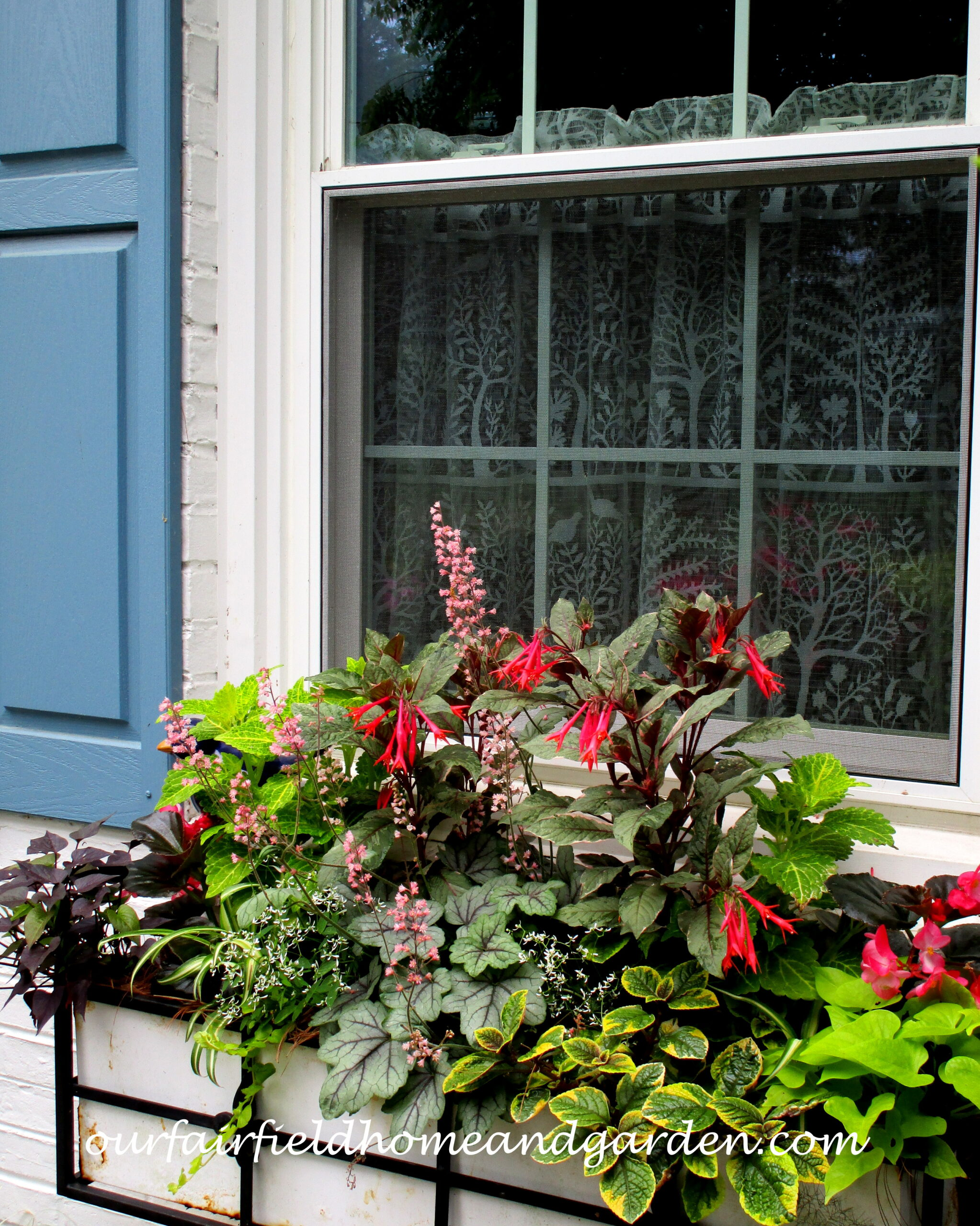 Summer Window Boxes